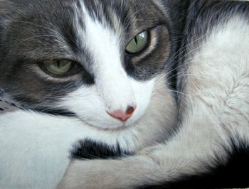 Paintings from picture, pets